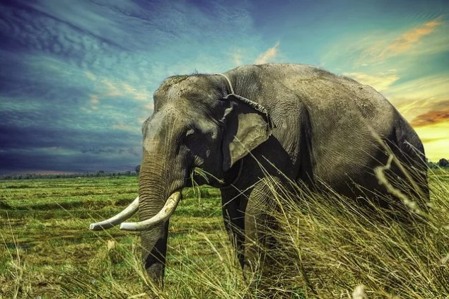Zwei Sumatra Elefanten getötet