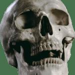 Deutscher wollte menschliche Schädel schmuggeln