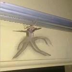 Bewohner entdeckt bizarre Kreatur in seinem Haus