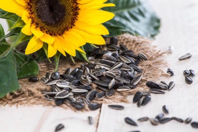 benefits-of-sunflower-seeds_1-1024x683-1.jpg