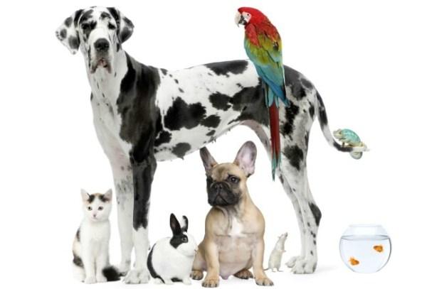 bethesda-md-rental-lease-pets