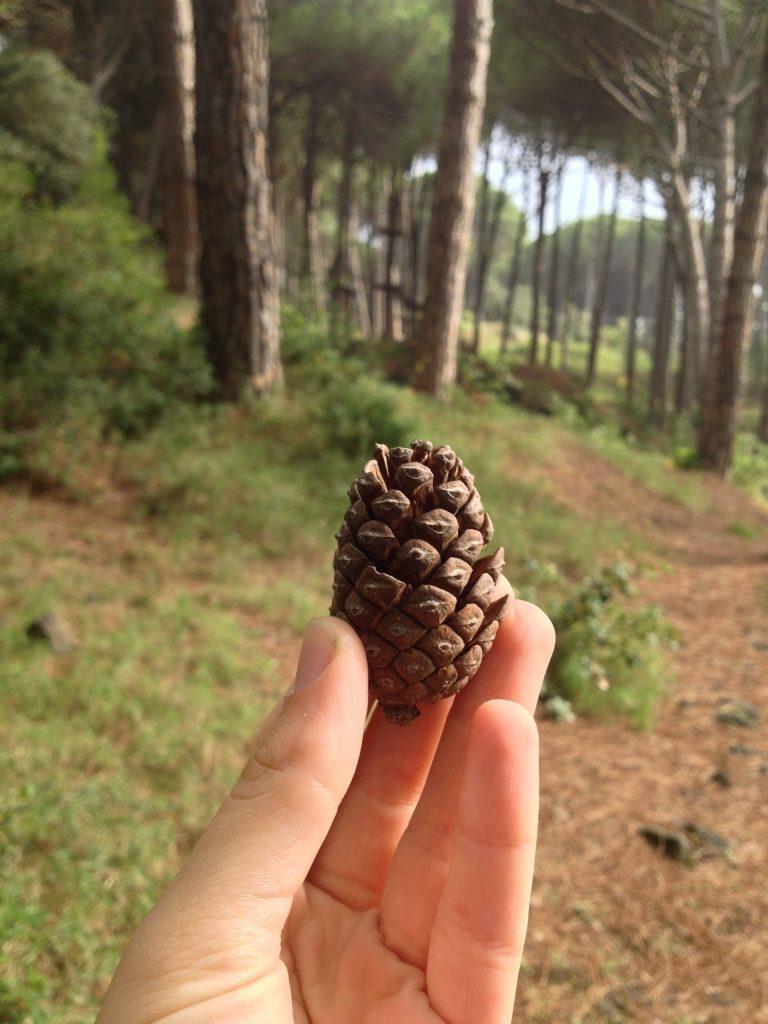 primo videoblog nella natura