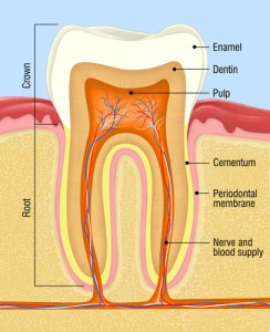 tooth fillings fremont dentist