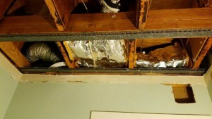 ceiling mold problem