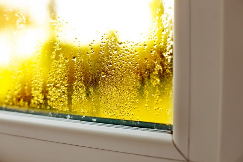 How to Fight Mold Issues During the Summer Heat & Humidity