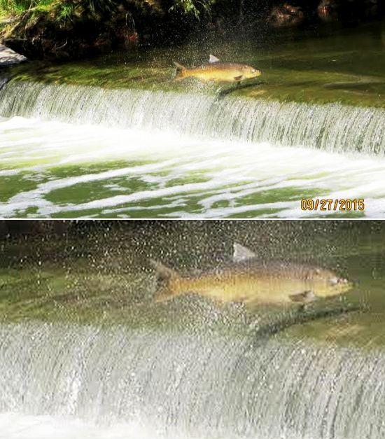 salmon-together