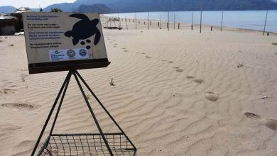 Photo of Turkish beach in Mugla records highest number of turtles nests