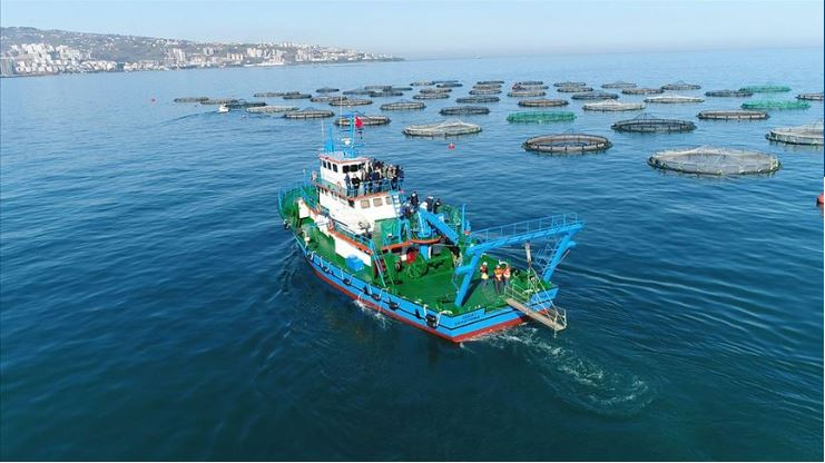 Trabzon leads with 25% of exports in East Black Sea zone 1