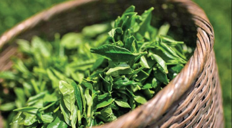 Rize made $6.4 million from tea exports in the first 9 months 1