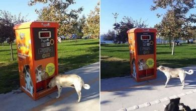 Turkey: Automatic food machines to help stray animals 24
