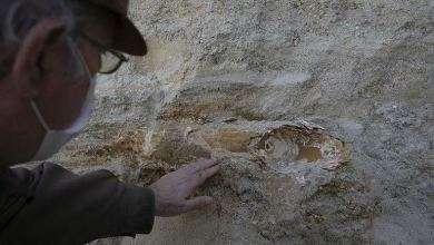 Photo of Mammoth fossil found in northwestern Turkey