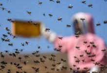 Beekeepers will be provided information via a cooperation with Meteorology Directorate 3