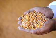 Turkey's grain and pulses producers has exported to 211 countries worth $6.5B products 11