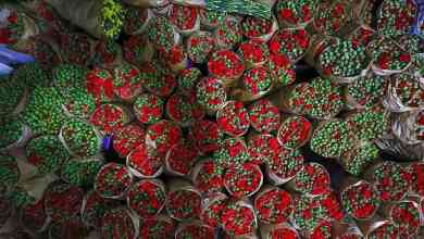 $107 million export to 83 countries from the flower sector 6