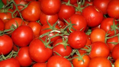 Istanbul residents consumed mostly tomatoes and potatoes in 2020 23