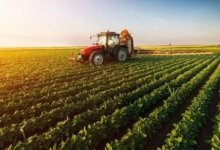 Turkey broke the record in plant production 10