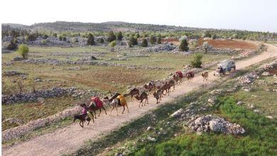 Nomadic Turks preserve lifestyle despite advancing technology 7