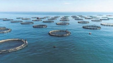 Fisheries exports reached $1.1 billion 6