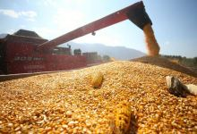 Turkey's agricultural sector grows for 10th quarter in row 3