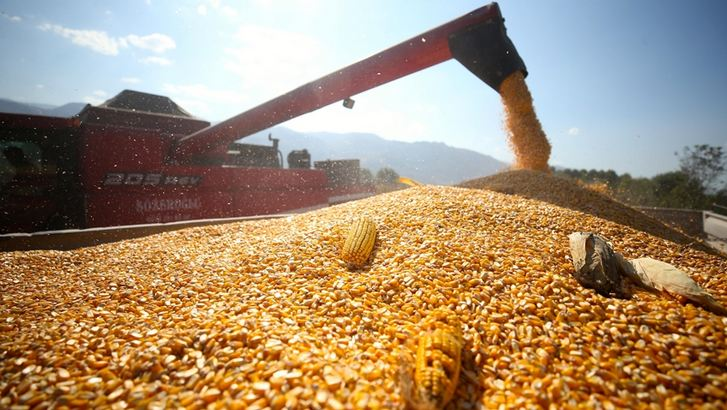Turkey's agricultural sector grows for 10th quarter in row 1