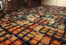 Turkey: The target in lemon export is $300 million 3