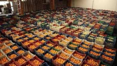 Turkey: The target in lemon export is $300 million 9