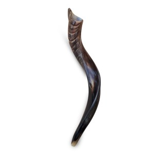 Shofar Yemenite Kudu - 50-60 Cm Half Polished Half Natural