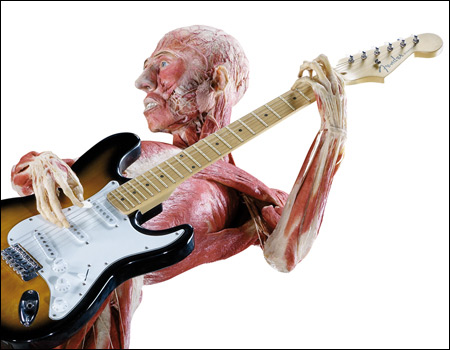 "The image ""https://i2.wp.com/www.bbc.co.uk/manchester/content/images/2008/01/18/bodyworlds_guitarist_01_450x350.jpg"" cannot be displayed, because it contains errors."