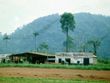 A village in a cleared area of rainforest