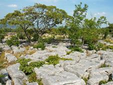 Holme Park Quarry - protected limestone quarry