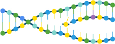 DNA helix unzipping and being copied