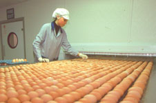 A worker checks eggs coming off a production line.