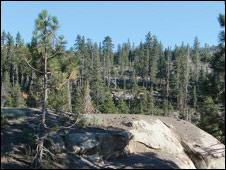 Árboles sobre rocas