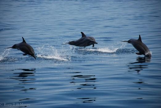 Dolphins blue marine foundation