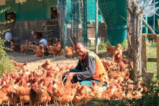 la vialla chickens