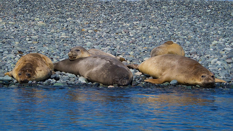 2019 19-Daagse Hurtigruten expeditie; Ontdek Patagonië, Chileense Fjorden en Ant