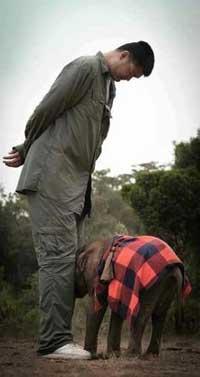 Poachers kill 300 Zimbabwe elephants with cyanide