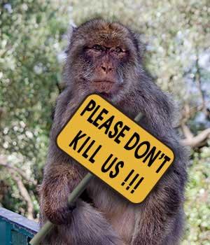 Legislating Animal Killing as a Crime/ Those Who Kill Animals as Murderers