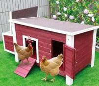 outdoor chicken hoop