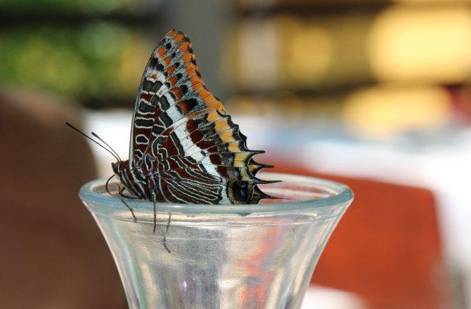 Nahaufnahme Schmetterling am Wasserglas