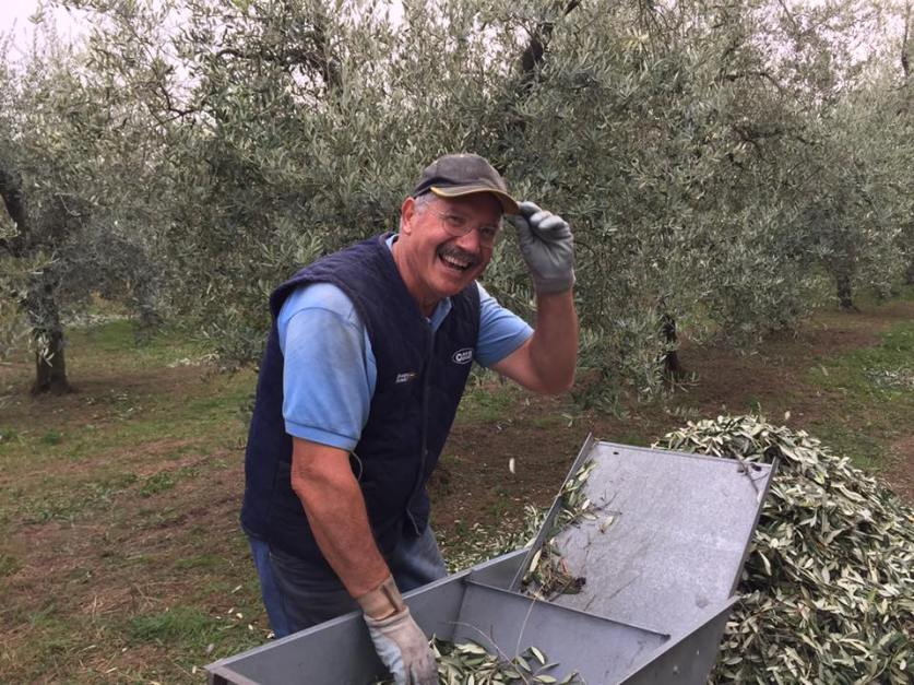 Raccolta olive Biologiche a Puegnago del Garda
