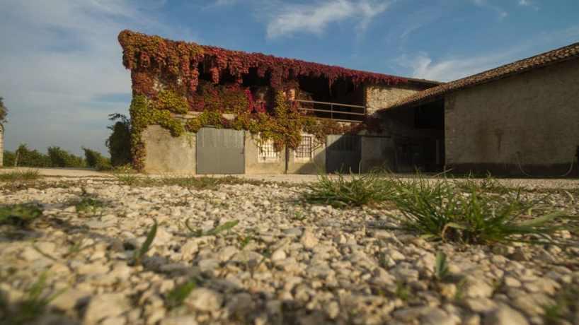 Terreno per coltivazione delle uve per la produzione del vino bianco biologico Marangona