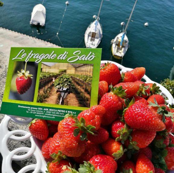 Fragole di Salò sul lago di Garda