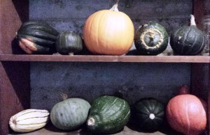 pumpkin and other squashes