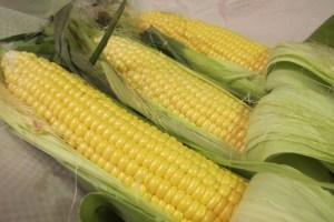 Three cobs of Chilliwack corn