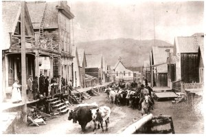 Cattle going through Barkerville. Image courtesy Barkerville Archives.