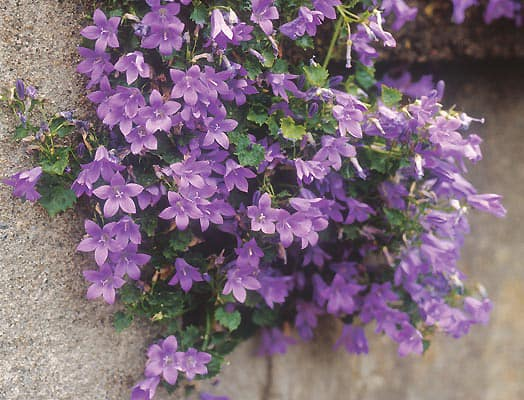 Wall Baskets Flowers