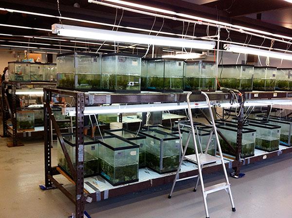 Weevil Lab