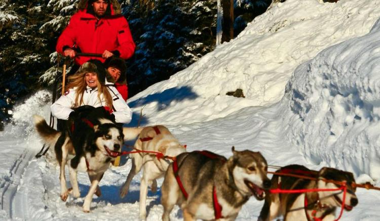 Image result for dog sledding whistler