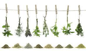PLANTES AROMATIQUES B COMME NATURE